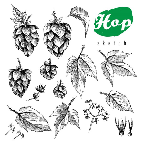 Beer flower plants Vector AI